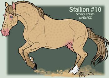 Mustang Stallion Adoption 10
