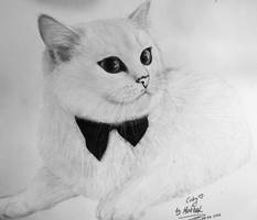 Coby the cat by Maarel