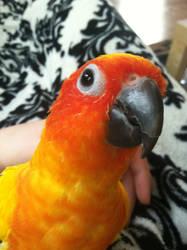 Parrot Selfie by LunaTheWhite
