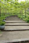 Pathway to Eden