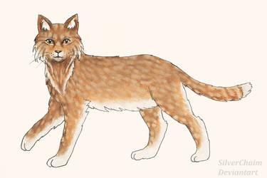 C: Behtaal Cat by SilverChaim