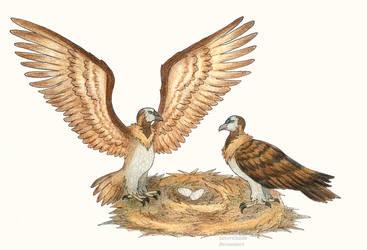 C: Reintan Condor by SilverChaim