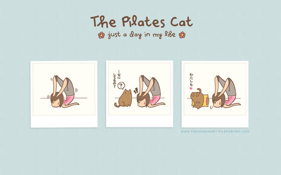 The Pilates Cat Wallpaper