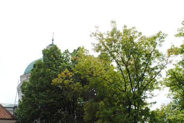 Trees in Verde by Rowena-Silver