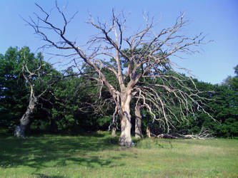 Beetle Tree by Rowena-Silver