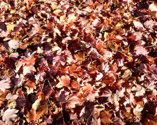Autumn Copper by Rowena-Silver