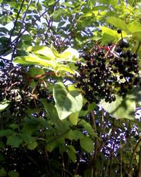 Fruitful by Rowena-Silver