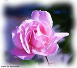 Flores do Junqueiro IV