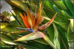 Flores do Junqueiro IX