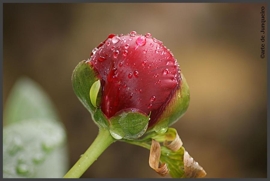 Loves bloom by Arte-de-Junqueiro