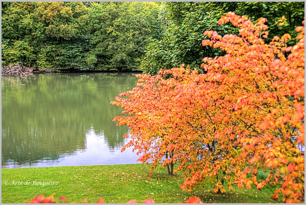Trees are changing colour by Arte-de-Junqueiro