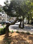 Natures Dali Tree