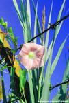 Barbed Flower