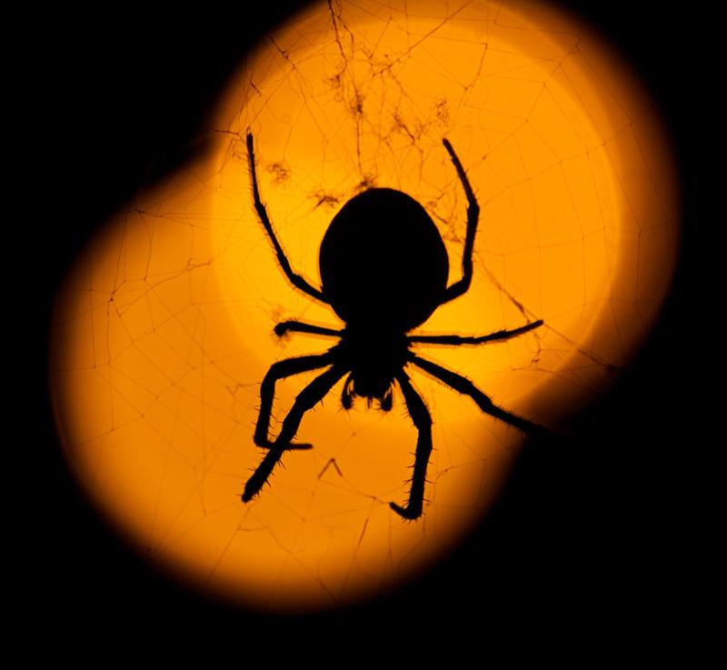 Spider by AlexWilson