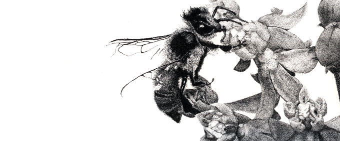 dotty bee