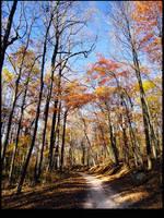 A Path Through Fall by nemesisenforcer
