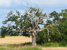 Arbre by Owps