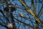 Oiseau '1 Mesange by Owps