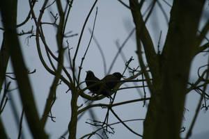 Oiseau '4 by Owps