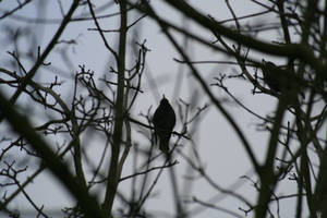 Oiseau '5 by Owps