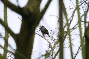 Oiseau '6 by Owps
