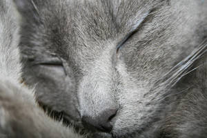 Chat _ Eclipse '12 - Sleeping Cat by Owps