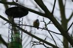 Oiseau '8