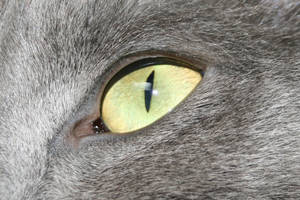 Chat _ Eclipse '14 - Eyes' cat by Owps