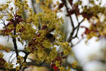 Bourdon '1 _ Bumblebee loving flower
