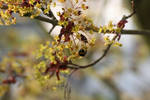 Bourdon '4 _ Bumblebee loving flower