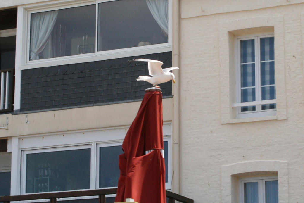 Oiseau '11 - I'm flying ! Oh wait... by Owps