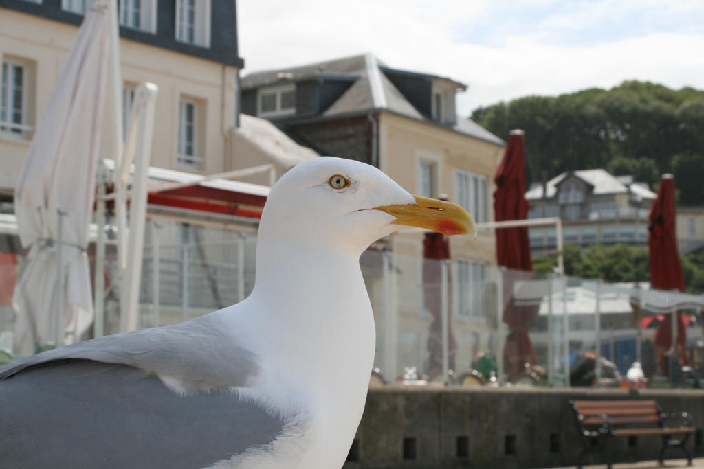 Oiseau '10 _ Eye's of the gull by Owps