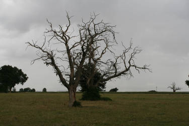 Desolation '4 _ Sick trees by Owps