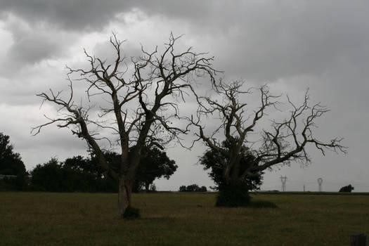 Desolation '5 _ Sick trees