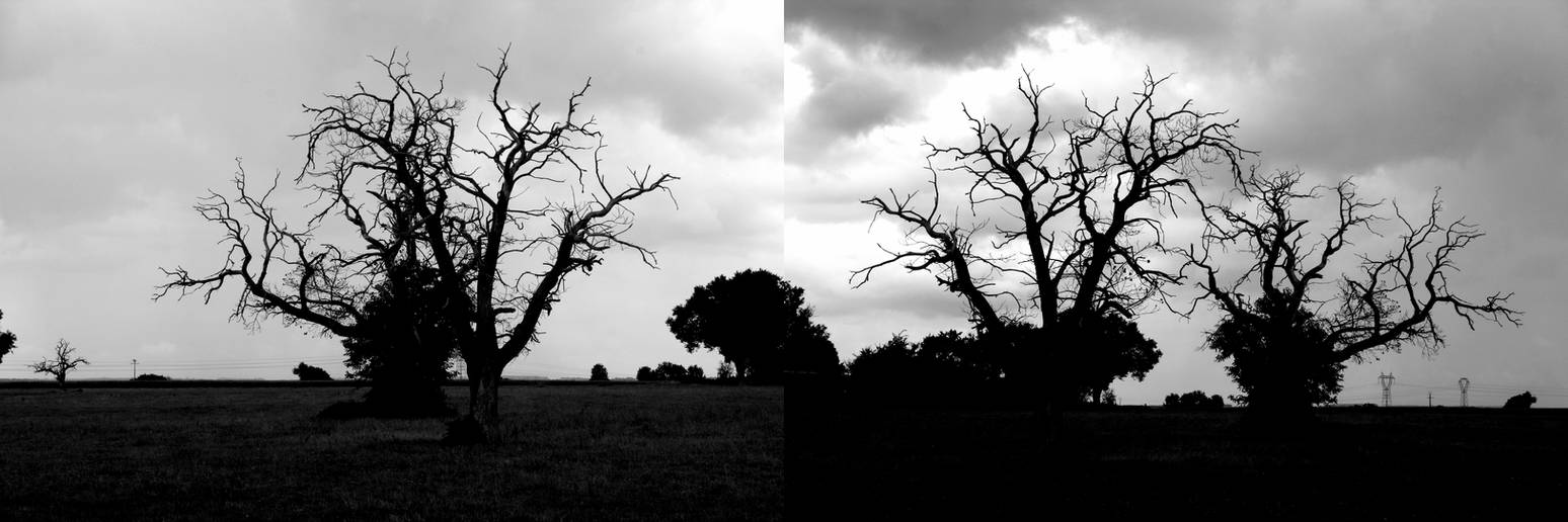 Desolation '6 _ Sick trees in Black and White by Owps