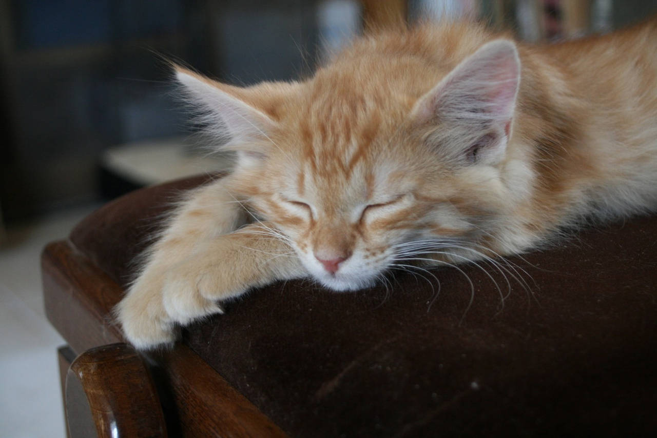Sleeping kitty by Owps