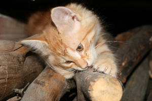 Kitty versus wood by Owps