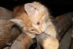 Kitty versus wood