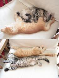 Sleeping kitties by Owps