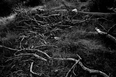 Desolation...