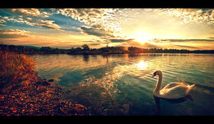 Once upon a swan