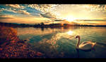 Once upon a swan by TomekKarol