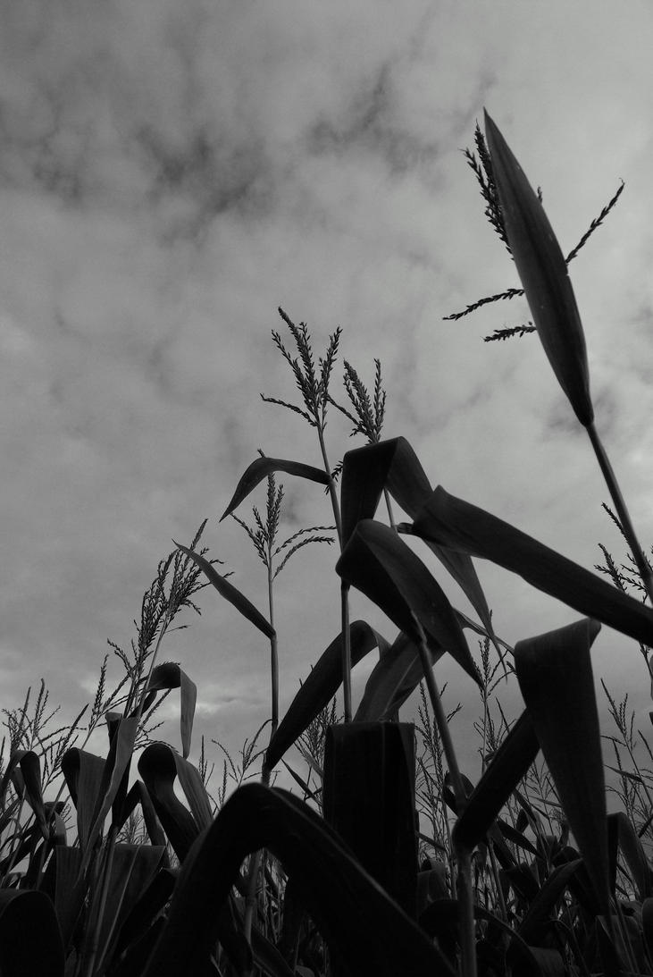 Corn Silhouette by bas...