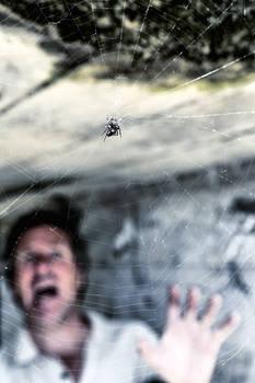 Arachnophobic