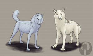 Comparing white wolves