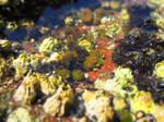 Sea Anemone 4