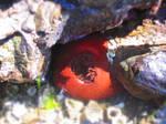 Big anemone
