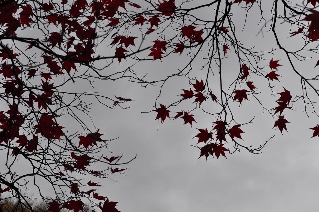 Leaves of Red 2: 2012 by insanity-pillz