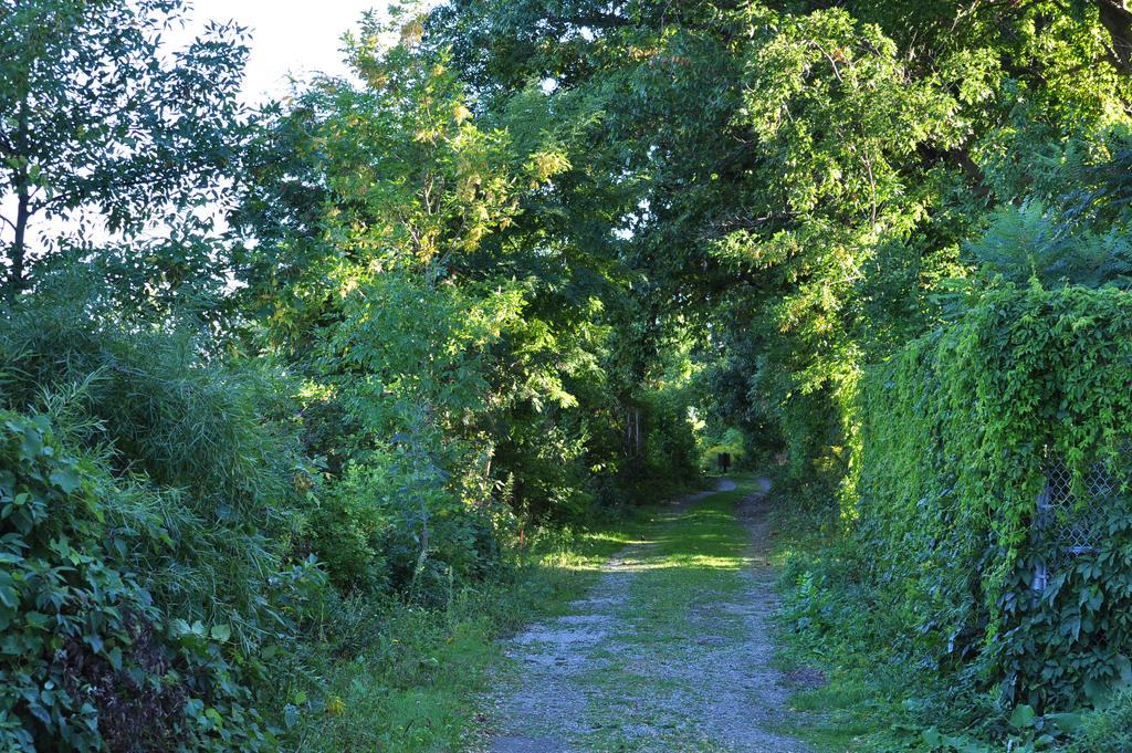 Path near the Pond - 2013 by insanity-pillz