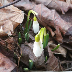 The First Sign of Spring